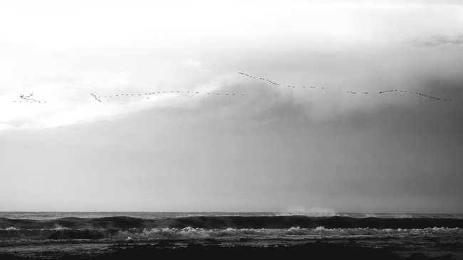 birds and waves